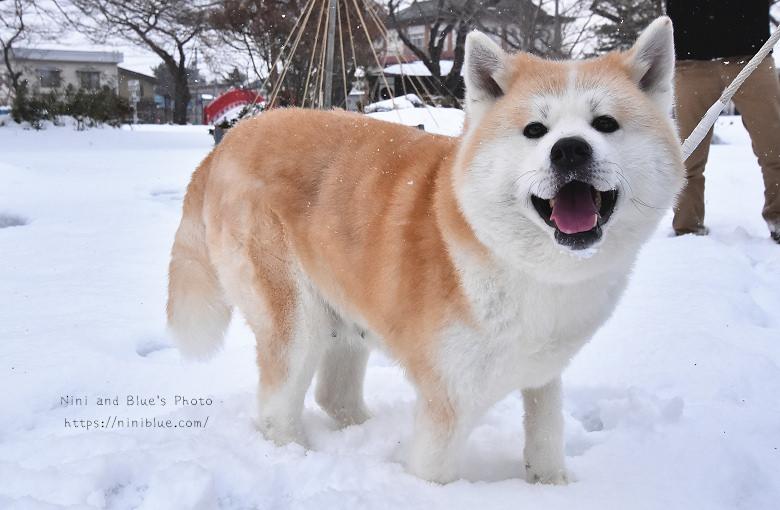 日本東北秋田自助旅行雪屋祭典28