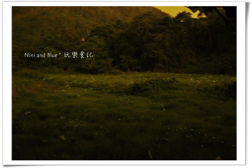 草湳螢火蟲06.jpg