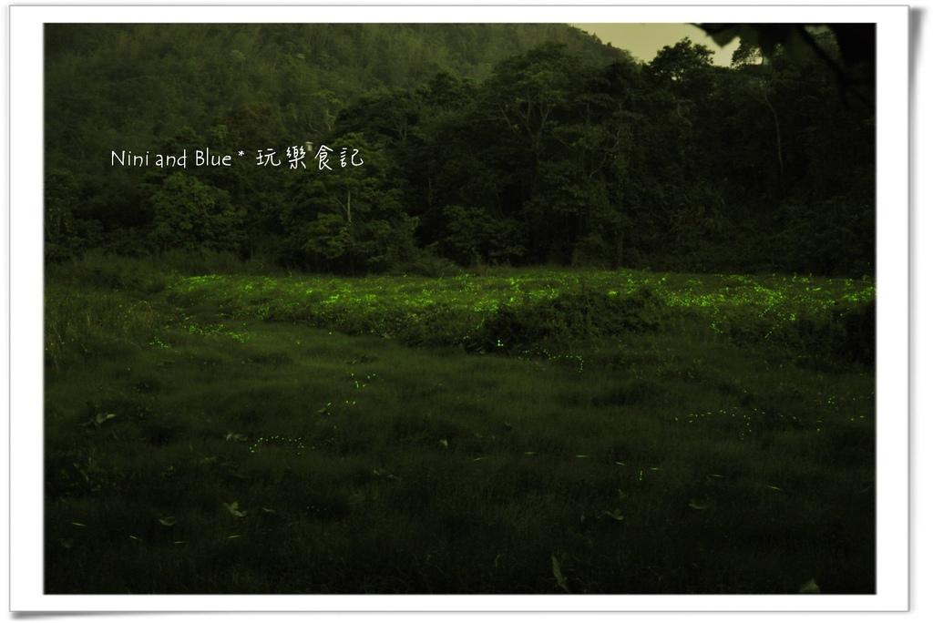 草湳螢火蟲07.jpg