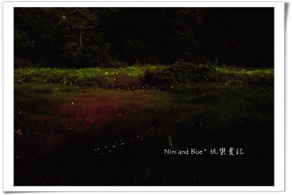 草湳螢火蟲05.jpg