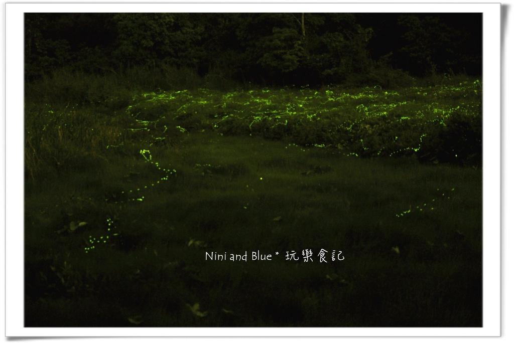 草湳螢火蟲08.jpg