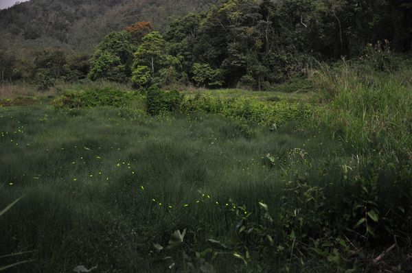 草湳疊圖2.jpg