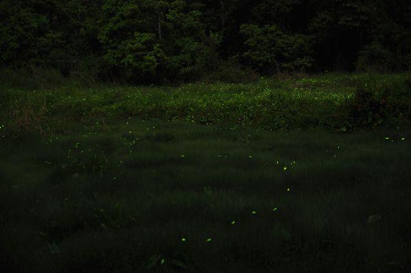 草湳疊圖8.jpg