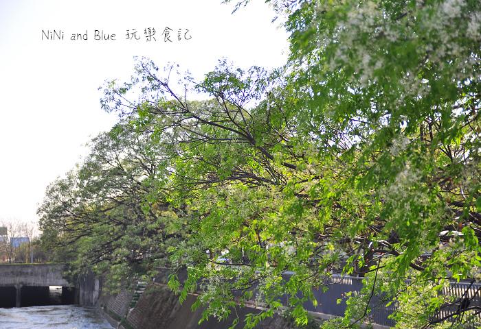 台中風鈴木34.jpg