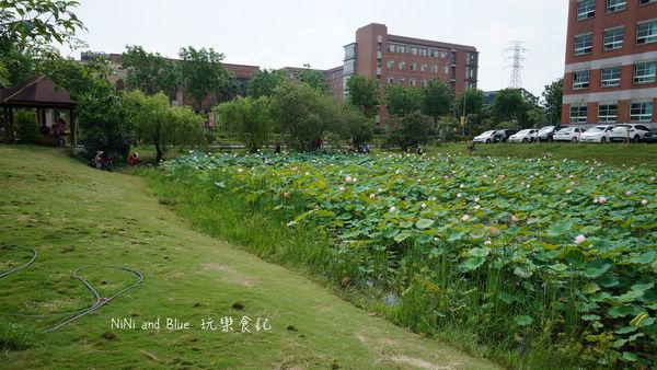 亞洲大學阿勃勒荷花19.jpg